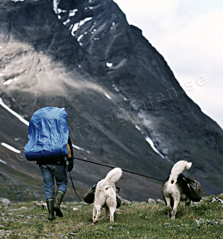 alpine hiking, Andra nyckelord, back-packer, dog, dogs, greenland dog, klövja, klövjning, landscapes, Lapland, mountain, mountains, nature, outdoor life, sommarfjäll, summer, wild-life, äventyr