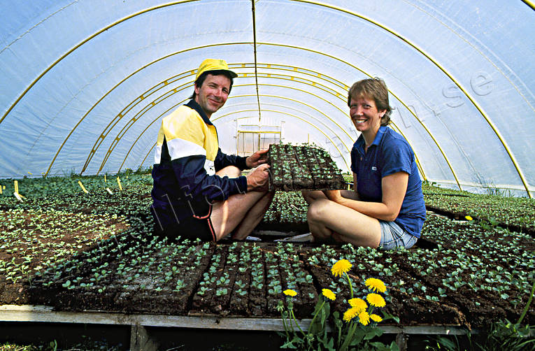 agriculture, alternative cultivation, conservatory hot-house, garden, garden centre, greenhouse, work