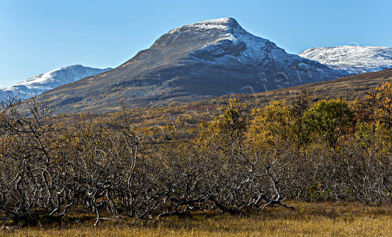 alpine, alpine landscape, autumn, autumn colours, autumn morning, birch, birch leaf, Jamtland, landscapes, mountain, mountain peaks, mountain top, mountains, nature, season, seasons, Snasa Mountains, Snasen, tvaraklumpen