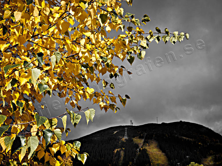 Areskutan, autumn, autumn leaves, Hummeln, Jamtland, landscapes, seasons, yellow