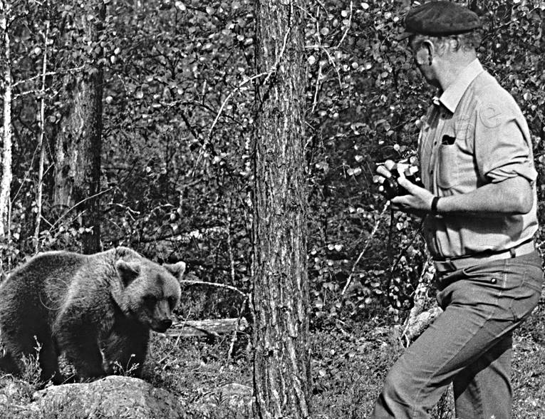 animals, bear, bear shooting, black-and-white, brown bear, human, mammals, photographing, predators, ursine