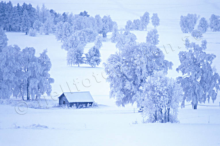 ambience, ambience pictures, atmosphere, barn, birchen meadow, birches, christmas ambience, christmas card, cold, cold, Froson, Jamtland, season, seasons, snow, winter, winter landscape, winter meadow, äng