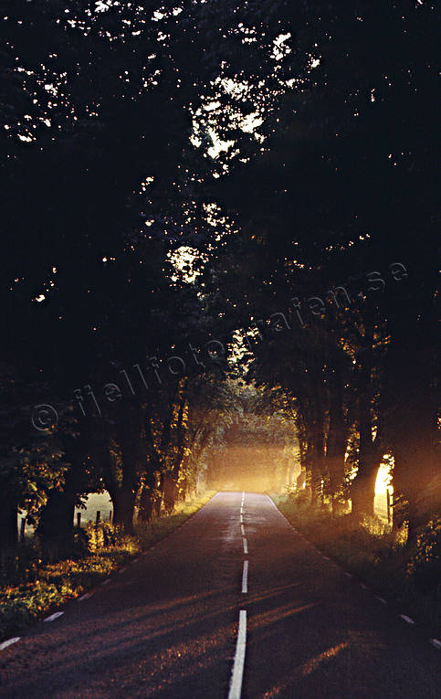 ambience, ambience pictures, andarum, atmosphere, chestnut tree, colonnade, evening sun, road, season, seasons, summer, sunlight, sunrise, sunset