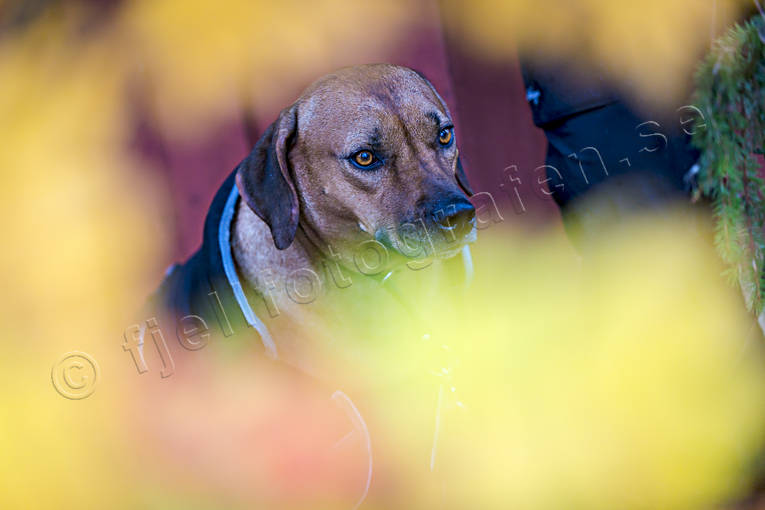 animals, autumn, dog, mammals, pets
