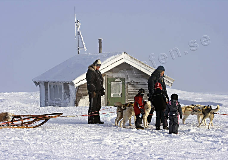 mountain, mountains, outdoor life, sled dog, sled dogs, sledge dog, snow, tourism, wild-life, winter, äventyr