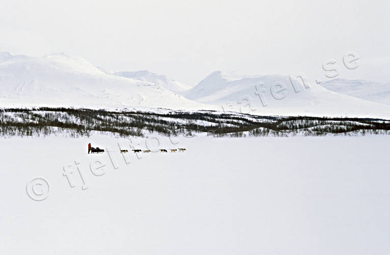 cold, dog musher, dog handler, dogsled ride, mountain, mountain peaks, mountain people, scenic alpine view, sled dog, sled dogs, sledge dog, sledge dog ride, sledge dogs, sledge trip, snow, spreads, expanses, views, white, white, wild-life, winter, äventyr