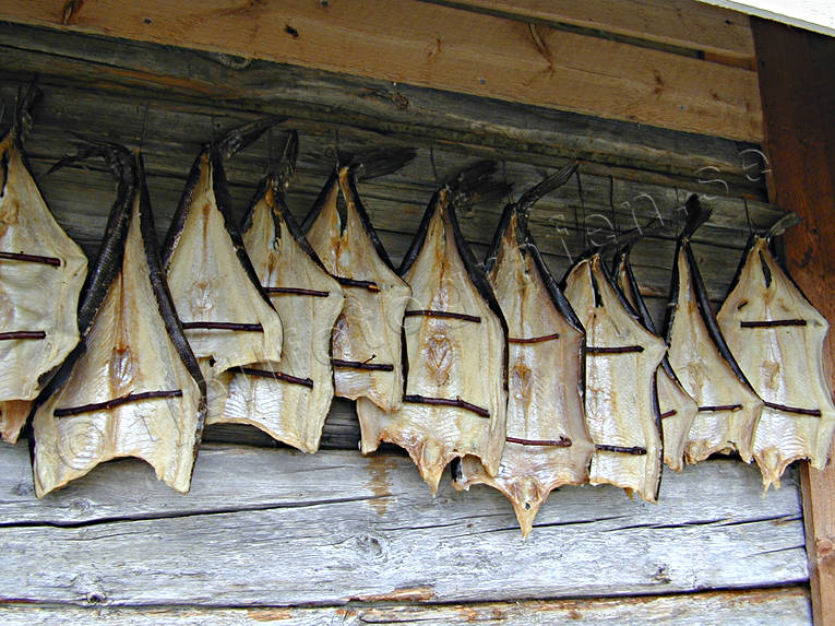dried, drying, fish, fishing, fishing, pike, torkaad fisk, work