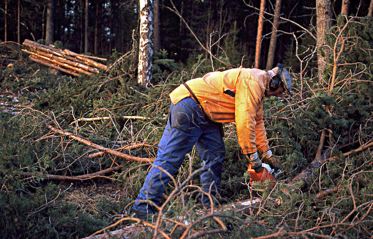 chain saw, forest worker, forest worker, forestry, timber, woodcutter, woodland, work