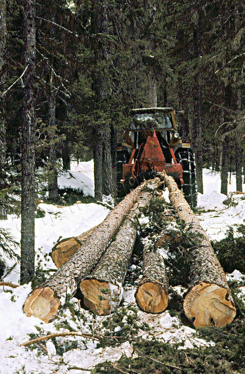 forest worker, forestry, timber, timber logs, tractor, woodcutter, woodland, work