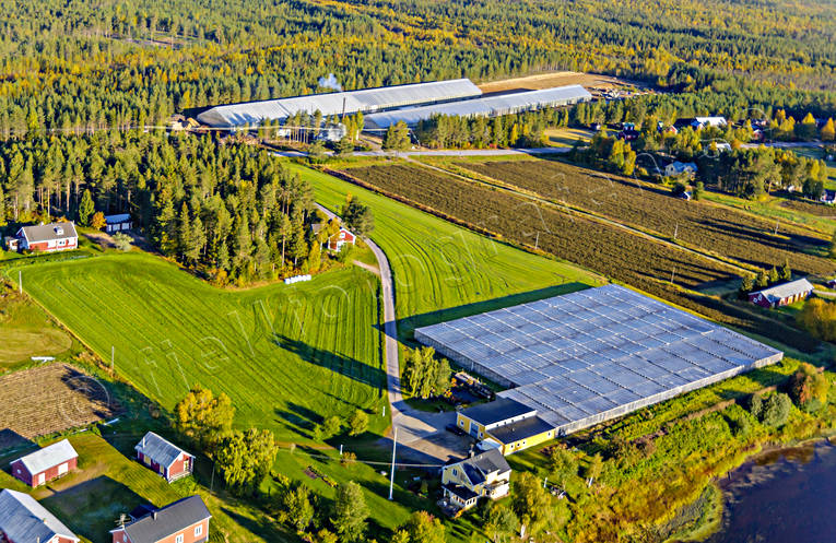 aerial photo, aerial pictures, autumn, buildings, drone aerial, engineering projects, farms, greenhouse, gurkodling, Hietalas Handelsträdgård, installations, Korva, North Bothnia, polar circle, tomatodling