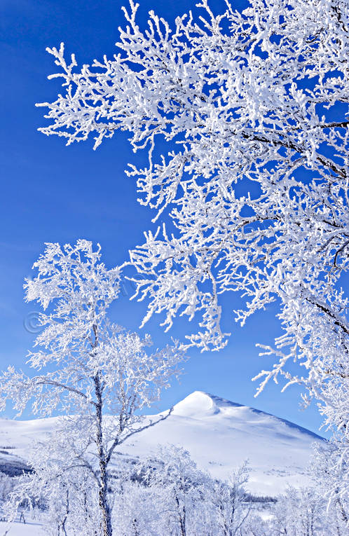 atmosphere, Gaisare, hoarfrost, landscapes, Lapland, mountain, season, seasons, snow, vita vidder, winter, winter mountains
