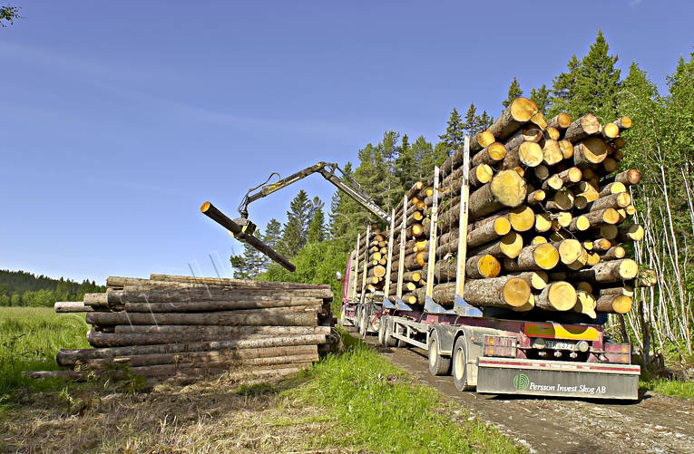 communications, forest motor road, forestry, land communication, loading, timber, timber truck, truck, woodland, work