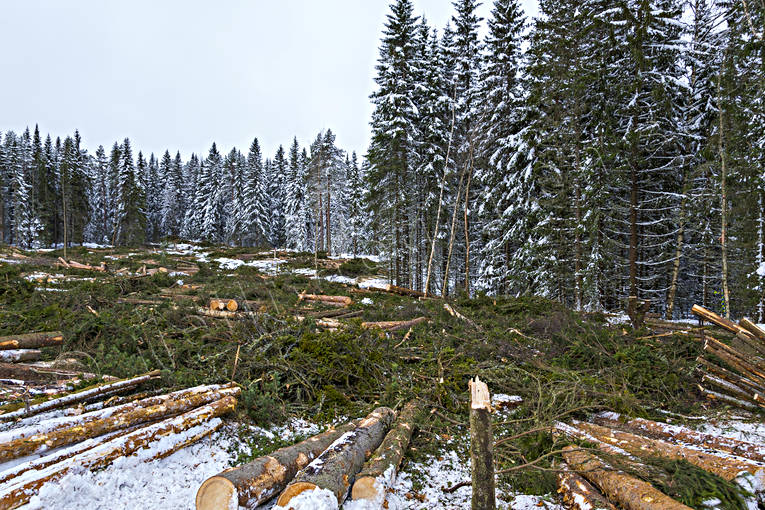 clear-felled area, cutting area, felling, forestry, nature, timber, timber logs, winter, woodland, work