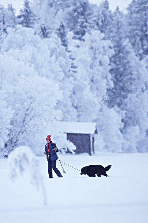ambience, ambience pictures, atmosphere, backcountry skiers, christmas, christmas ambience, christmas card, christmas pictures image, dog, exercise, girl, Jamtland, outdoor life, season, seasons, ski touring, skiing, snow, winter, äventyr