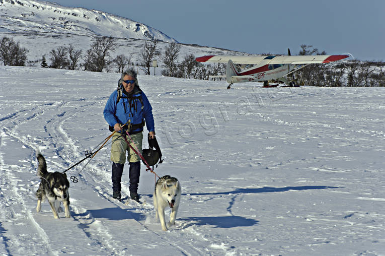 aeroplane, outdoor life, ski touring, skier, skiing, sled dog, sled dogs, spring-winter, winter, äventyr