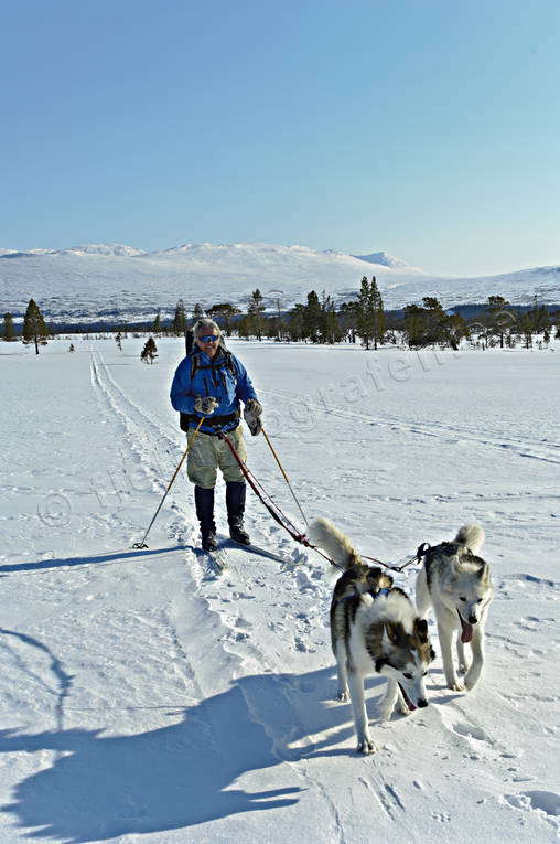 outdoor life, ski touring, skier, skiing, sled dog, sled dogs, spring-winter, winter, äventyr