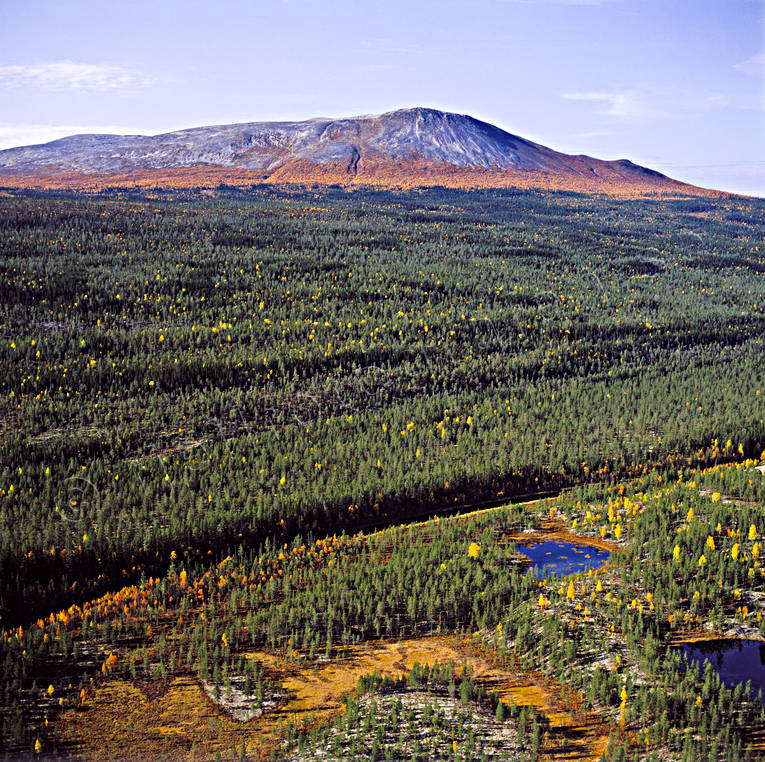 aerial photo, aerial pictures, autumn, autumn colours, drone aerial, fjällbilder, Herjedalen, mountain, mountain, mountain forest, national park, near mountains, Sonfjället, Swedish Mountains, woodland