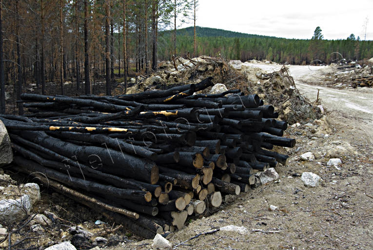 burnt, burnt, environment, fire, forest fire, forest land, forestry, nature, pulp wood, timber, woodland, work