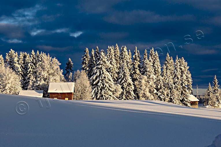 ambience, ambience pictures, atmosphere, Jamtland, landscapes, pines, season, seasons, snow, spruce forest, winter