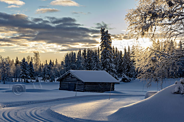 ambience, ambience pictures, atmosphere, barn, christmas ambience, Jamtland, landscapes, Löfsåsen, pines, season, seasons, ski touring, snow, spruce forest, vinterro, winter, winter forest, woodland, äventyr