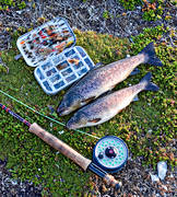 angling, fishing, fly, fly rod, flyfishing, trouts