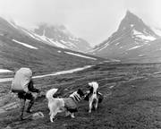 alpine, alpine hiking, back-packer, back-packing, black-and-white, dog, dogs, landscapes, Lapland, mountain, mountain, mountain top, mountain visit, mountains, Nallo, Nallu, nature, outdoor life, Stuor Reaiddavaggi, summer, wild-life