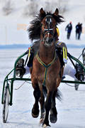 Are, Are lake, cold-blooded, horse, horses, ice trot, sport, travhästar, travsport, trot, various, winter