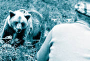 aggression, animals, attack, bear, bear-hunt, björnattack, black-and-white, brown bear, general hunting, human, hunting, mammals, predators
