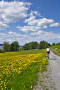 bicyclist, bike, bike, dandelion meadow, dandelions, early, gravel road, Great Lake, Jamtland, outdoor life, road, season, seasons, summer, summer garth, summer road, wild-life, äventyr