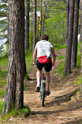 bicyclist, bike, bike, early, forest path, Jamtland, outdoor life, path, pine, pine forest, season, seasons, summer, wild-life, äventyr