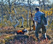 alpine hunting, apport, apport, hunting, pointing dog, white grouse hunt