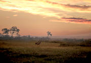 ambience, animals, birds, crane, cranes, dawn, landscapes, mire, morning, nature, sunrise