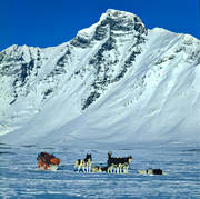 alpine, alpine landscape, animals, greenland dog, greenland dogs, högfjällen, mammals, mountain, mountain peaks, mountain top, outdoor life, Sarek, Sarek nationalpark, Sarekfjäll, sledge dog, sledge trip, snow, sport, vinterbild, wild-life, winter ambience, winter landscape, winter mountains, winter shroud, Ähpar