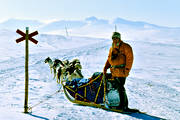 dogsled, dogsled ride, Herjedalen, mountain, sled dogs, sledge dog, sledge dogs, sledge trip, swedish mountains, sylarna, track mark, wild-life, winter, äventyr