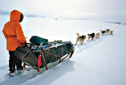 dogsled, dogsled ride, greenland dogs, sled dog, sled dogs, sledge dog, sledge dogs, sledge trip, wild-life, winter, äventyr