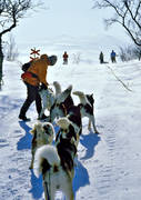 cold, dog musher, dog handler, dogsled ride, greenland dogs, mountain people, sled dog, sled dogs, sledge dog, sledge dog ride, sledge dogs, sledge trip, snow, wild-life, winter, äventyr