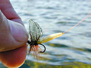 angling, dry fly, fishing, fly, flyfishing, green drake, may fly