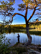 angling, angling, boy, evening, evening fishing, fishing, fishing, pine, rogivande, spin fishing, to angle