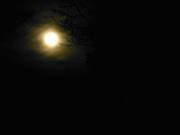 ambience, ambience pictures, atmosphere, autumn, darkness, full moon, ghostly, moon, moonlight, night, season, seasons