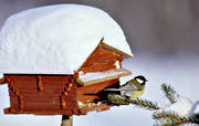 animals, bird, bird-table, birds, christmas, christmas ambience, christmas card, christmas pictures image, great tits, little bird, passeriform, passeriformes, small birds, såglar, winter