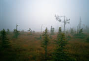 autumn, biotope, biotopes, bleak, gruesome, bog soil, dull, fog, mire, nature, solitary, unfrequented, lonely, tree, wasteland, wilderness