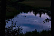ambience, ambience pictures, angling, atmosphere, common goldeneye, creek, duck, evening, fishing, fiskeå, flyfishing, forest creek, Hans Lidman, inspiration, Mållångsboån, night, pine trunks, reflection water, Svartån