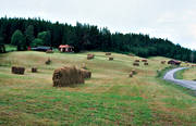 agriculture, arable land, Berge, hay drying rack, hay drying rack, hay drying racks, Jamtland, landscapes, summer, work
