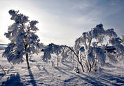 alpine birch, ambience, atmosphere, birch, cold, cold, court, frosty, hoarfrost, mid-winter, mountain, mountain scene, mountains, nature, rime ice, seasons, sunset, tree, vinterbild, winter, winter ambience