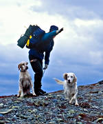 alpine hunting, bird hunting, english setter, hunting, pointing dog, setter, white grouse hunt