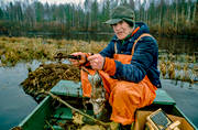 boat, felling, hunting, musk rat, muskrat, spring trap, trapper, trapping