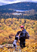 alpine hunting, animals, autumn, autumn colours, bird hunting, dog, dogs, german shorthaired pointer, hunter, hunting, mammals, mountain, pointing dog, white grouse hunt