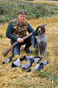 apport, apporter, crow, crow hunting, crow shooting, eddish, stubble field, hunting, kråkfågel, shooting