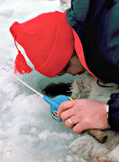 angling, burbot fishing, fishing, ice fishing, ice fishing, ice fishing, lake, winter fishing