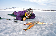 angling, char, fishing, ice fishing, ice fishing, ice fishing, kikmeta, mountain fishing, winter fishing